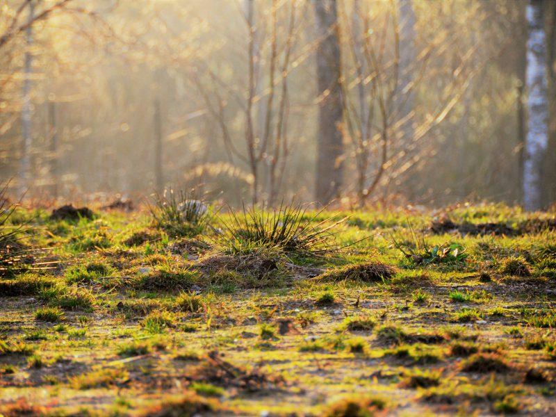 Отдых на Валдае, квадроциклы, озеро Велье, Валдайский национальный парк, DSC_0674