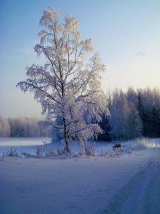 Отдых на Валдае, квадроциклы, озеро Велье, Валдайский национальный парк, P1040372