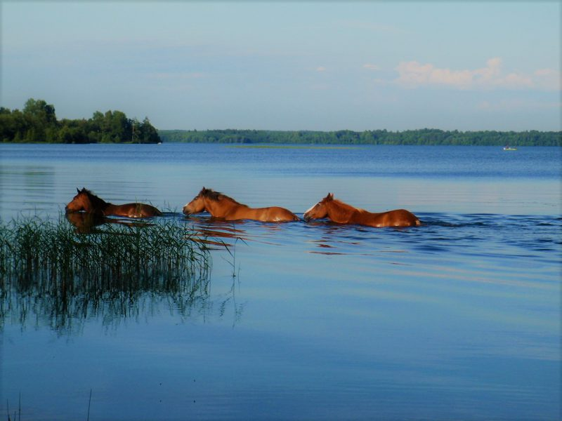 Отдых на Валдае, квадроциклы, озеро Велье, Валдайский национальный парк, P7010143